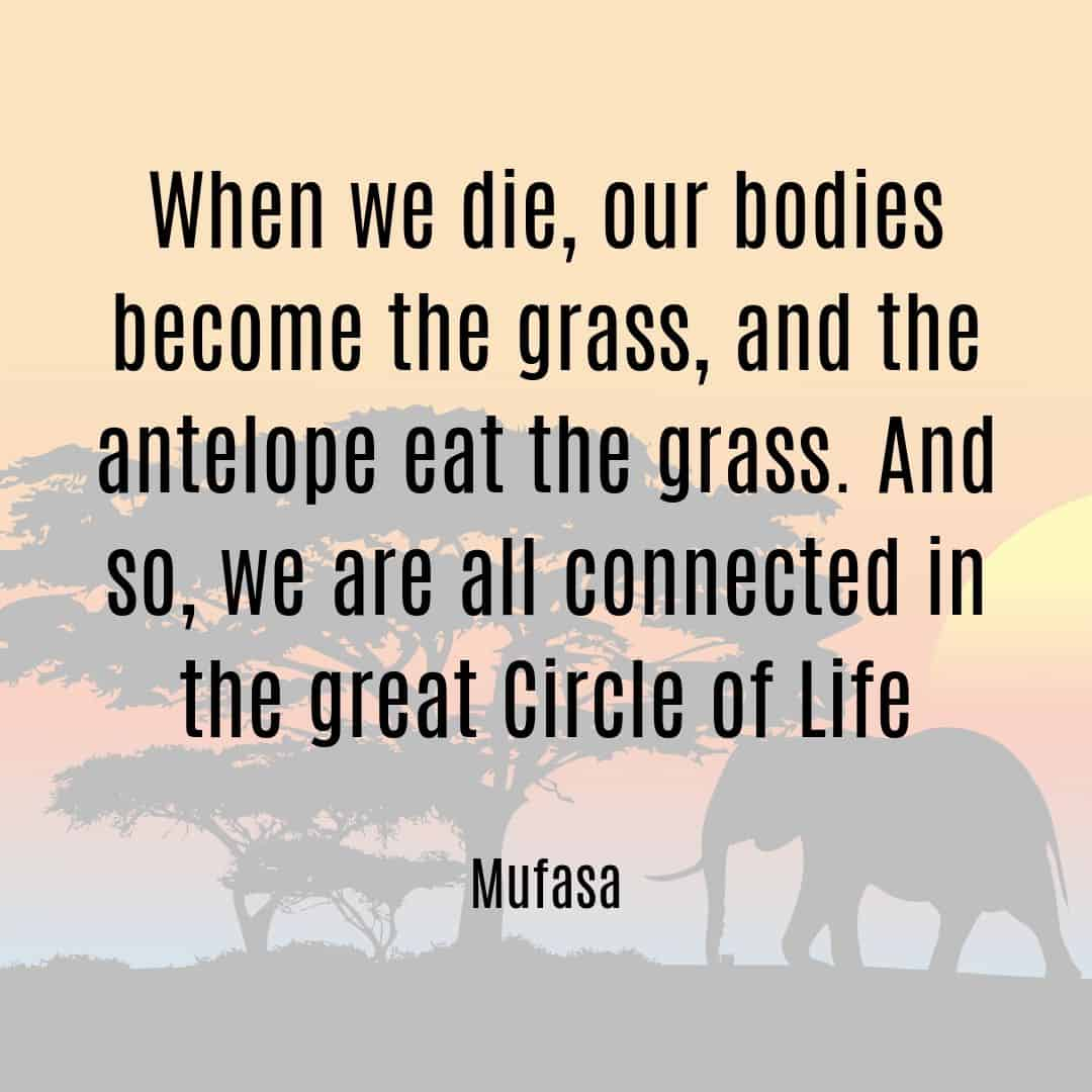 When we die, our bodies become the grass, and the antelope eat the grass. And so, we are all connected in the great circle of life Mufasa quote Lion King